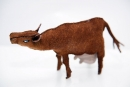 brown-cow