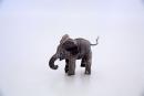 elephant-calf-1