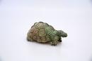 giant-tortoise